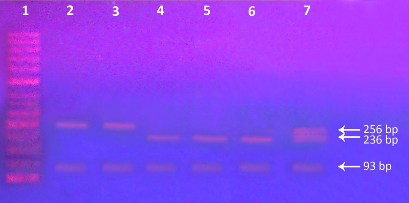 2013 4 5 Genetic Our Dermatology Online Journal